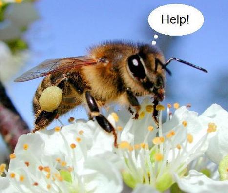 Bruxelles veut protéger les abeilles sans bannir les pesticides | Abeilles, intoxications et informations | Scoop.it