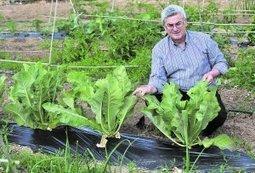 Diez municipios ofertarán menús ecológicos a través de 39 locales - La Verdad   educación infantil   Scoop.it