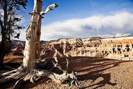 How One Man Accidentally Killed the Oldest Tree Ever | GarryRogers NatCon News | Scoop.it