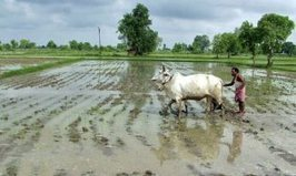 Rural Tech – Irrigation Systems Controlled By Mobile Phones | InRural | Scoop.it