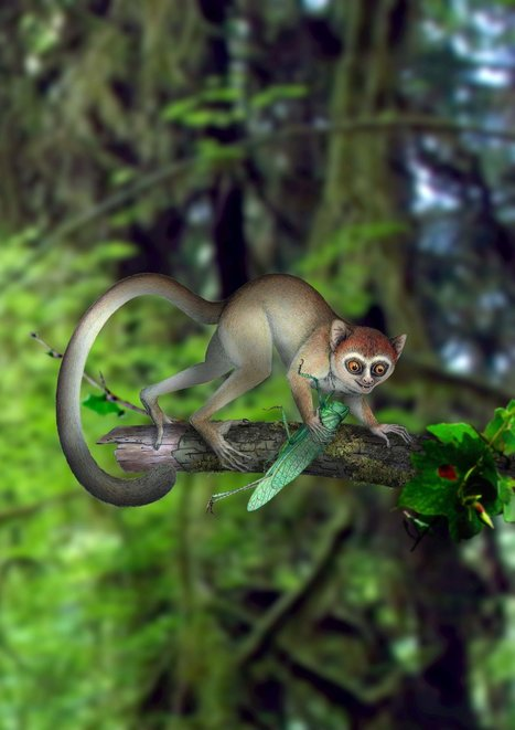 Palm-Size Fossil Resets Primates' Clock, Scientists Say | Learning, Teaching & Leading Today | Scoop.it