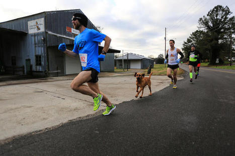 Playful Dog Sneaks Out of Her Yard and Ends Up Running in a Half-Marathon Race | Le It e Amo ✪ | Scoop.it