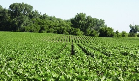 No dicamba use allowed on RR2X soybeans in 2016 | Grain du Coteau : News ( corn maize ethanol DDG soybean soymeal wheat livestock beef pigs canadian dollar) | Scoop.it