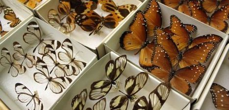 UA Insect Collection Renovation Continues as Annual Festival Nears   UANews   CALS in the News   Scoop.it