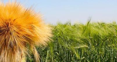 Kingdom to halt wheat production by 2016Agriculture - Curated by GreenWorld www.greenworldbvi.com | agriculture investments | Scoop.it