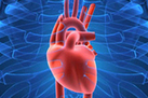 Does the Heart Have a Sense of Smell? | Shareables | Scoop.it