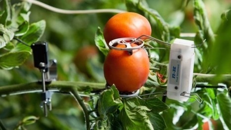 Plant world to get Israeli Internet of Things tech | Jewish Education Around the World | Scoop.it