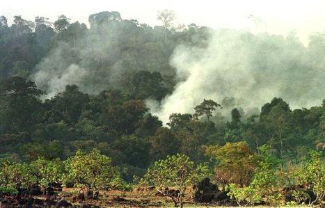 BRESIL: La déforestation amazonienne en hausse de 28% sur un an | Ouvrir les yeux | Scoop.it