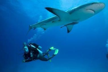 Top 10 Surprising Facts About Sharks | All about water, the oceans, environmental issues | Scoop.it