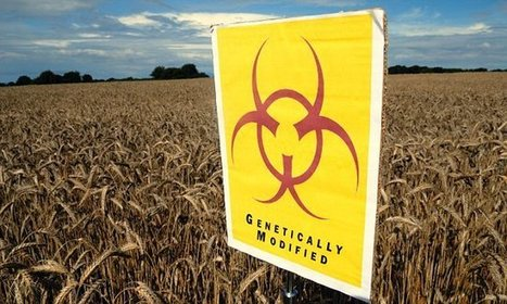 GM farming is creating superweeds and resistant bugs | OrganicNews | Scoop.it