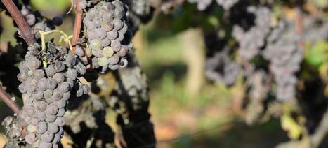 Artisans vignerons: ça sulfite, maintenant! | Le Vin et + encore | Scoop.it