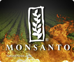Monsanto unleashes massive GMO push into Africa | Commodities, Resource and Freedom | Scoop.it