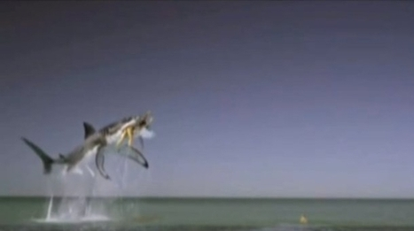 Une fausse publicité pour Tampax avec des mannequins et... un requin ! - Vidéos de Pub - Créa   Insolite, Weird News   Scoop.it