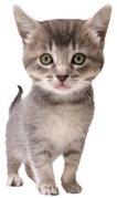 Avon Animal Hospital - Veterinarian In Surrey, BC Canada :: Services   Animal Hospital Surrey   Scoop.it