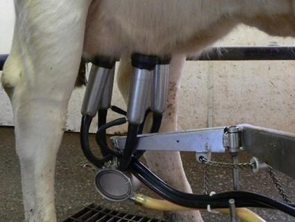 Le laitier zimbabwéen Dendairy va se lancer dans l'exportation de ... - Agence Ecofin | Un monde laitier | Scoop.it