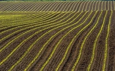 Le revenu des agriculteurs en déconfiture en 2013 | Questions de développement ... | Scoop.it