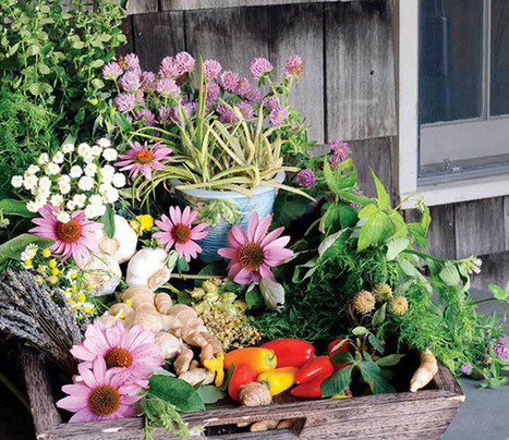 Medicinal herbs online   Buy & Sell Services for $1 to $1000 - Gigmom   Scoop.it