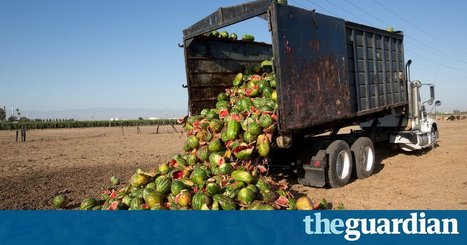 From field to fork: the six stages of wasting food | sustainablity | Scoop.it