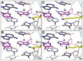TALENs made with NK to specify G have less activity than their NN-containing counterparts: Targeting G with TAL Effectors: A Comparison of Activities of TALENs Constructed with NN and NK Repeat Var... | Lorena's TAL Papers | Scoop.it