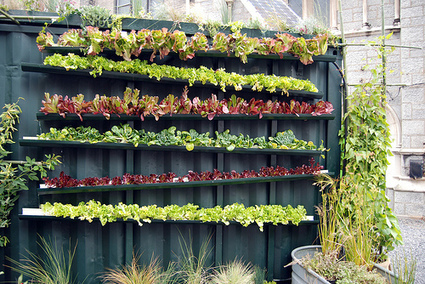 Vertical Gardening: Food For The Spatially Challenged « Thurman's ... | Wellington Aquaponics | Scoop.it