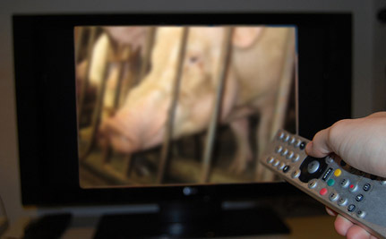 Mercy For Animals Debuts New Commercials | Nature Animals humankind | Scoop.it