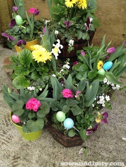 Planting Spring Bulbs in Winter -   Garden Ideas by Team Pendley   Scoop.it