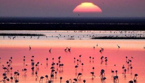 Sustentabilidad económica de los humedales | Agua | Scoop.it
