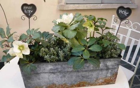 Con le piante da terrazzo come decorare il dava - Come decorare il giardino ...