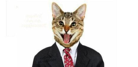 Compte désactivé à cause d'une photo de chat | Veille communautaire et réseaux sociaux | Scoop.it