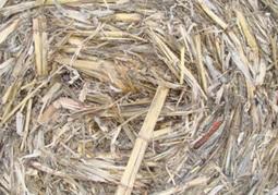 Pacific Ag acquires Calagri | Bio-Feedstock | Scoop.it