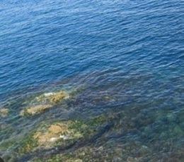 Cianobacterias oxigenantes colonizaron los océanos hace 800 millones de años | Agua | Scoop.it