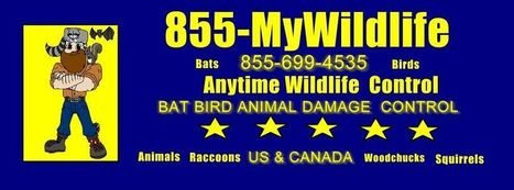 Get Wildlife Removal Salisbury Ocean City Chestertown Easton Maryland | The Best That I Got | Scoop.it