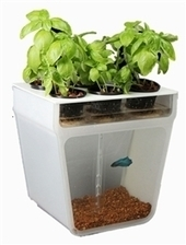 Home Aquaponics Garden- A Beautifully Simple & Closed-Loop Ecosystem Right on Your Table | Aquaponics Junkies | Scoop.it