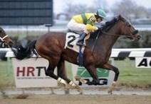 Bill Parcells' horse wins $250,000race   Horse Racing News   Scoop.it