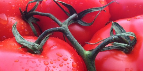 Three Things You Don't Know About Your Tomato - Huffington Post | Gender Inequality | Scoop.it