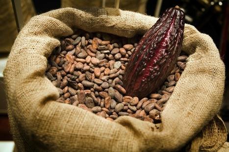Il cacao contro le malattie neurodegenerative | vivere l'alimentazione | Scoop.it