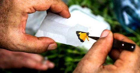 Objectif Mitaraka, épisode 8 : la forêt revisitée | EntomoNews | Scoop.it