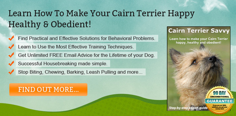 Cairn Terrier Training Information You Should Know | spirituality | Scoop.it