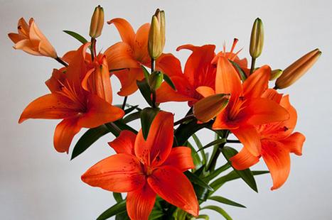 Send Flowers Online | Australia | Lili Flowers | Scoop.it