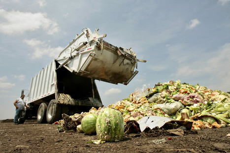 A Third Of Food Is Wasted, Making It Third-Biggest Carbon Emitter, UN Says | Vertical Farm - Food Factory | Scoop.it
