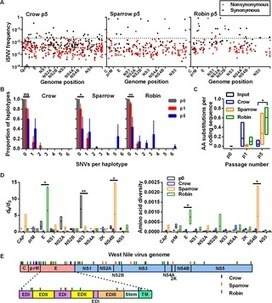 Experimental Evolution of an RNA Virus in Wild Birds: Evidence for Host-Dependent Impacts on Population Structure and Competitive Fitness   Bioinformatics Training   Scoop.it
