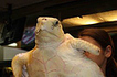 Three Flippered Turtle Rescue Story | Marine Biology | Scoop.it