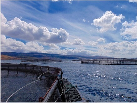 'Lab in a suitcase' could boost exports of Scottish salmon and know-how | Aquaculture Directory | Aquaculture Directory | Scoop.it