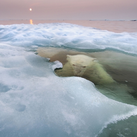 Wildlife Photographer of the Year 2013: The 11 Most Amazing Wildlife Photos Of ... - PolicyMic | The Secret to Creativity is... | Scoop.it