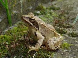 Annuaire de l'écologie, des parcs et réserves naturelles | Emploi et stages en environnement | Scoop.it