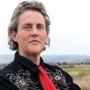 "Temple Grandin on DSM-5: ""Sounds like diagnosis by committee"" 