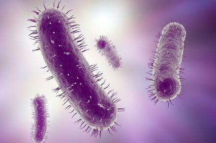 Le microbiote, un nouvel organe | La vie , la santé en microscopie électronique | Scoop.it