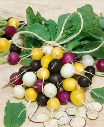 Master Gardener: Fruits & veggies worth trying in 2014 | Vegetable Gardening Resources | Scoop.it