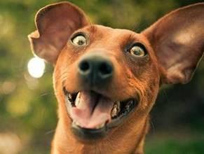 World's Worst Dog Jokes. | Plan a Dog Friendly Holiday | Scoop.it
