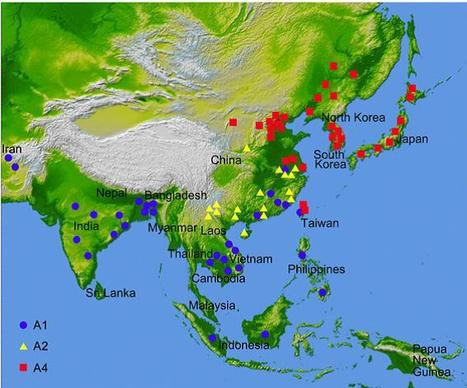 Association of functional nucleotide polymorphisms at DTH2 with the northward expansion of rice cultivation in Asia | Archaeobotany and Domestication | Scoop.it